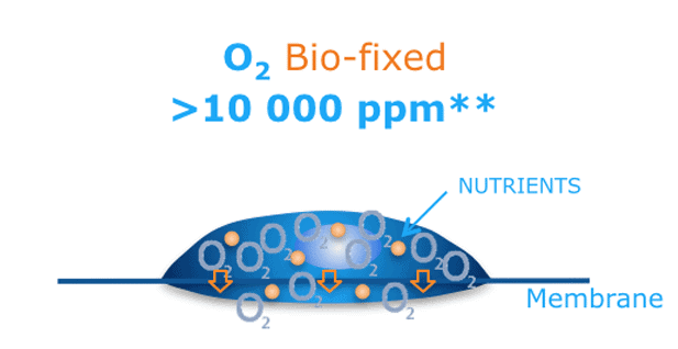 Nutra One water contain up to 10 000 ppm of fixed oxygen
