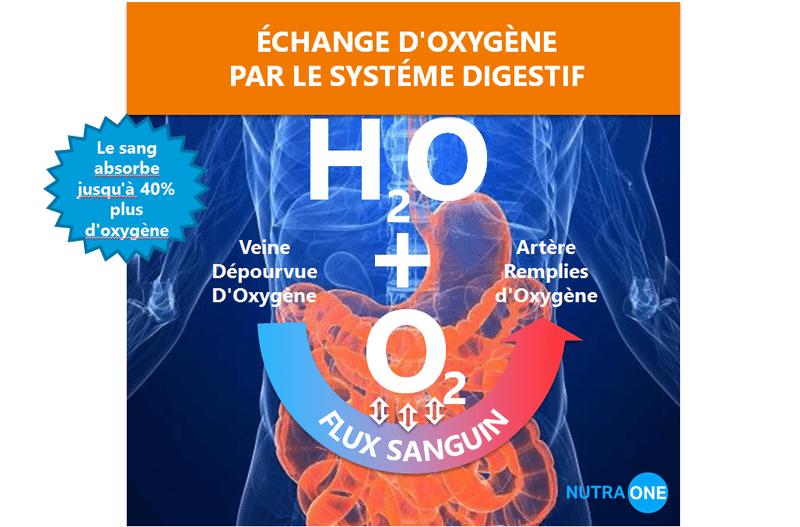 Échange d'oxygène par le système digestif