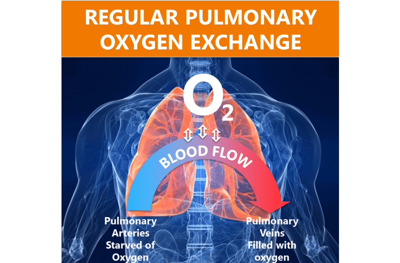 Regulary pulmonary oxygen exchange