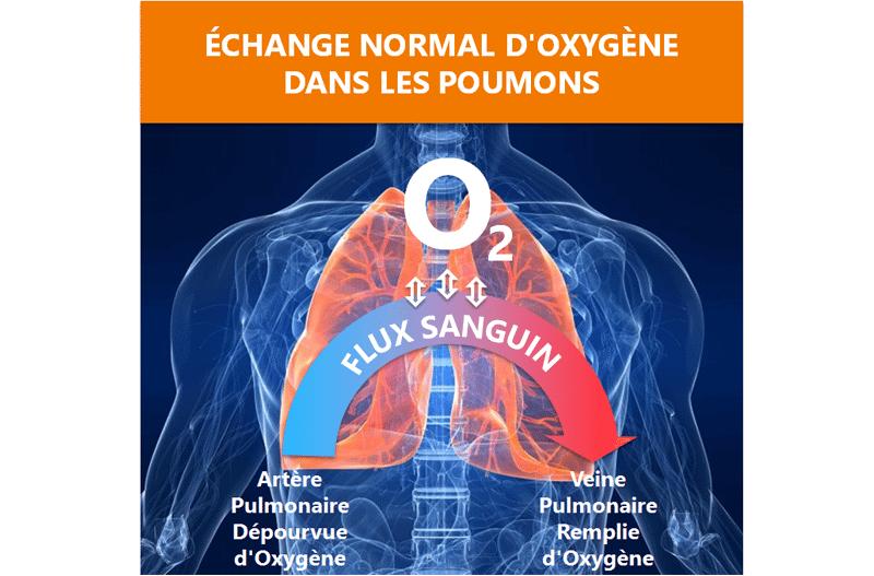 Échange normal d'oxygène dans les poumons